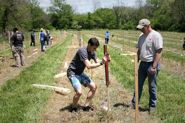 Volunteers planted more than 800 trees on two acres at the Homer C. Thompson Vegetable Research Farm. Above, student volunteer Radoslav Zlatev pounds in tree stake while Thompson Farm field assistant  Rick Randolph looks on.