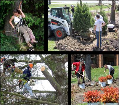 Study arboriculture