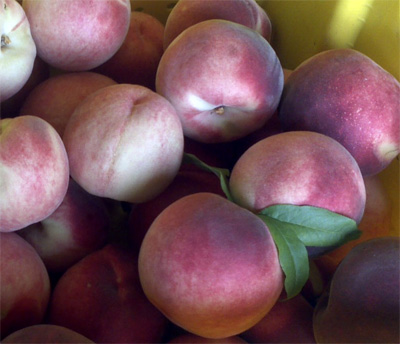 Fresh-picked peaches.  Yummy!