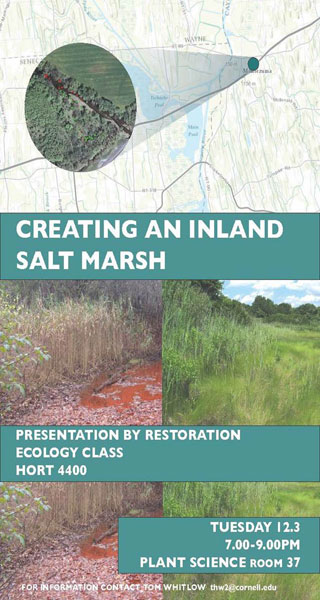 Creating an inland salt marsh