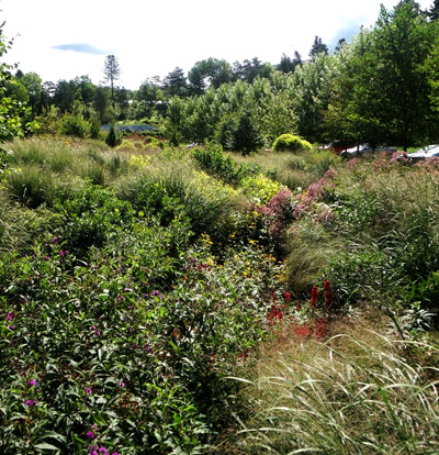 Bioswale at Cornell Plantations filters water from nearby parking lot. (Photo: Ethan Dropkin)