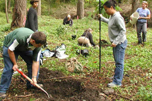 Students working in the Nut Grove