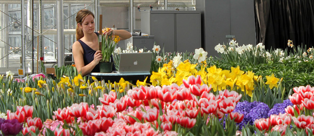 Flower bulb research intern Rose de Wit collects data at Kenneth Post Lab greenhouses.