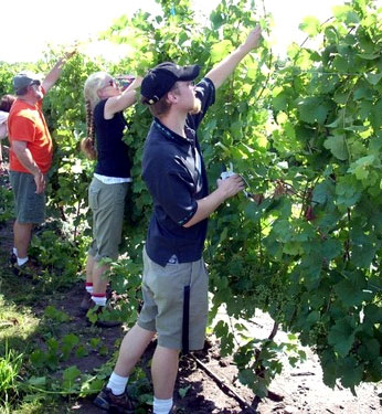 cuvee participants in working vines
