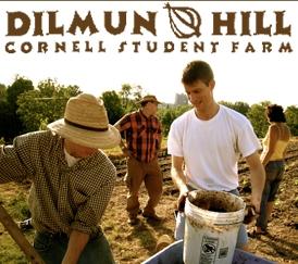 dilmun logo