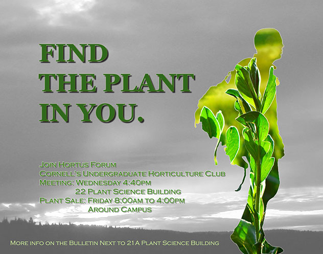 find the plant in you hofo poster
