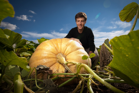 From the Dilmun Hill student organic farm near campus, Peter DelNero will pick a pentad of prime, plump pumpkins for the upcoming Big Red Pumpkin Regatta at Beebe Lake on Oct. 4. (Photo: Jason Koski/University Photography)