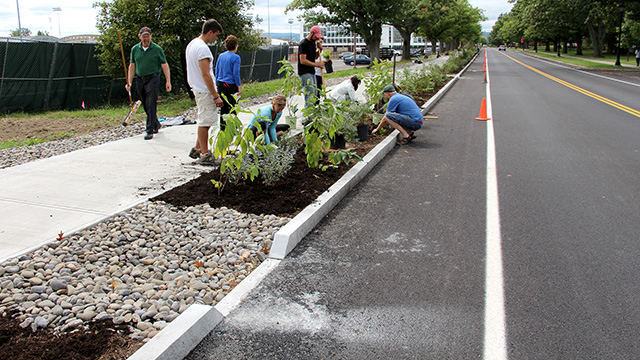 The shrubs used are tolerant to road salt and intermittent flooding and dry soil conditions.