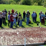 Justine Vanden Heuvel introduces attendees to new cranberry planting at Cornell Orchards.