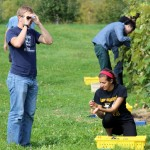 Measuring grape sugar content with Brix refractometer