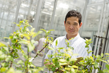 Kenong Xu's research will help researches change tree architecture allowing more high-density planting and transforming the layout of orchards. (Robyn Wishna photo.)