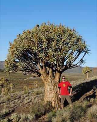 Xanthorrhoeaceae Aloidendron dichotoma (green) and Homo sapiens var. Miles Schwarz Sax (red)