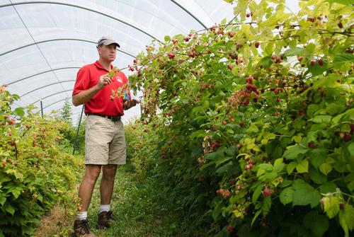 Cornell berry breeder Courtney Weber