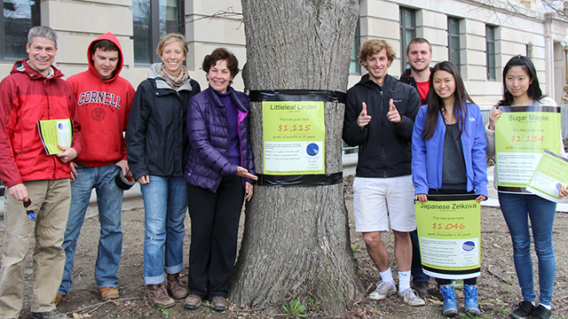 Nina Bassuk and Urban Eden students tag a Littleleaf Linden in front of Warren Hall.