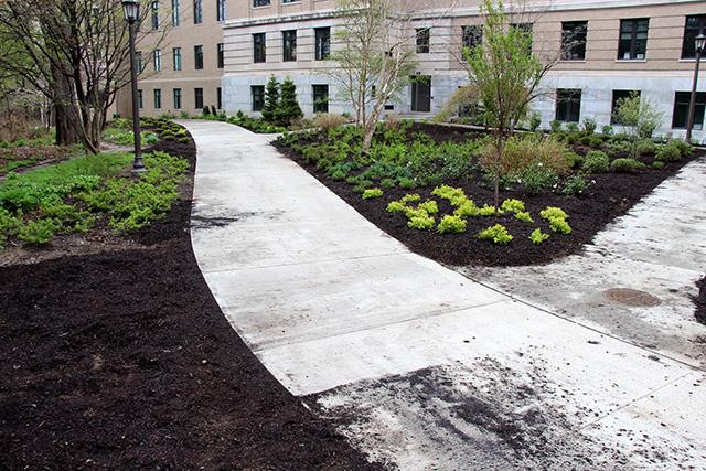 Warren Hall plantings