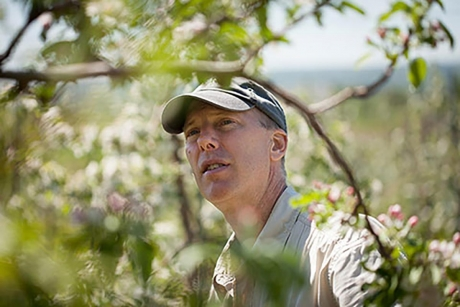 Bryan Danforth inspects apple blossoms and native pollinators at the Cornell Orchards. (Jason Koski/University Photography)