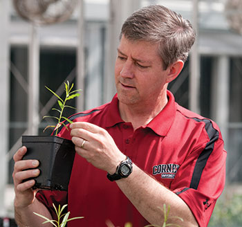Larry Smart examines a willow seedling from his breeding program. Photo: Robyn Wishna
