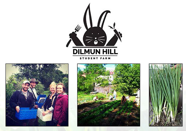 dilmun hill wrap up