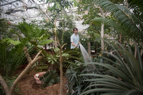 Greenhouse grower Paul Cooper in the newly reopened Liberty Hyde Bailey Conservatory. (Lindsay France/University Photography)