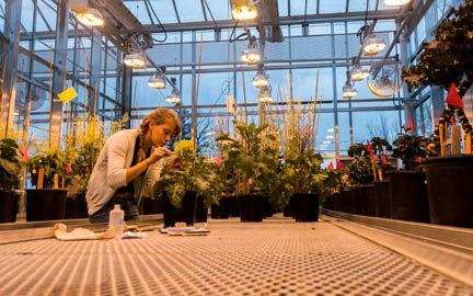 maria-greenhouse