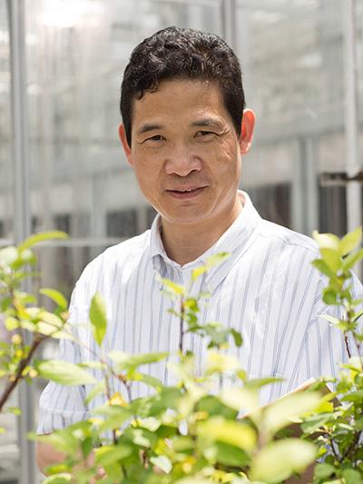 Kenong Xu