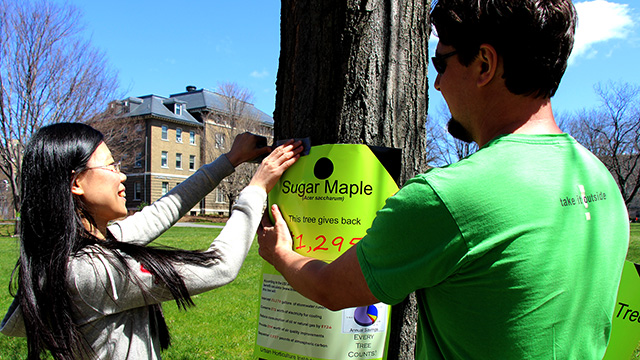 Urban Eden teaching assistants Huan Liu and Miles Schwartz Sax tag a sugar maple outside of Roberts Hall.