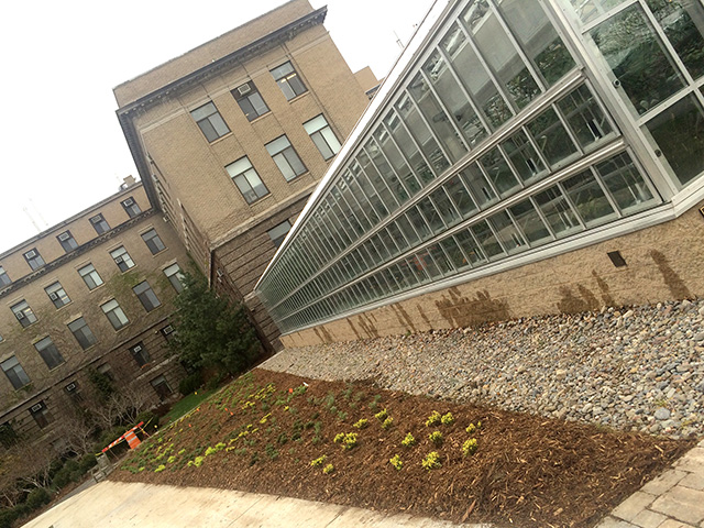 New planting outside the Liberty Hyde Bailey Conservatory at the entrance of the Plant Science Building.