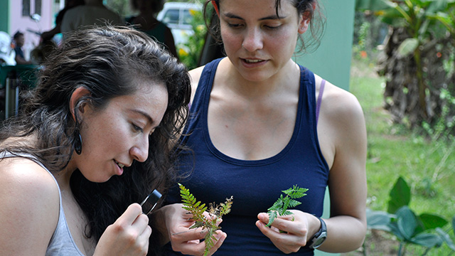 Students in the Belize group warm up with plant identification. (Photo: Sierra Murray)