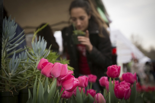 Students peruse the colorful offerings by Hortus Forum during an Earth Day display, April 20. (Photo: Jason Koski/University Photography)