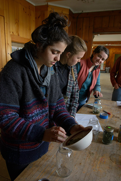 Students in the Ithaca group work with local herbalists to prepare herbal infusions (Photo: Isabel Gareau)