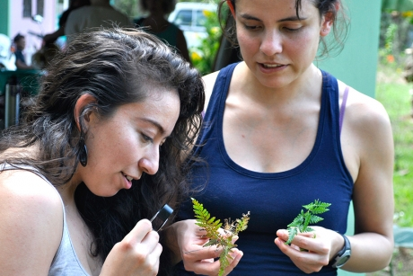 Laura Lagunez '16, left, and Camila Martinez, a graduate student in the field of plant biology, examine plants in Belize during their spring break. (Photo: Sierra Murray)
