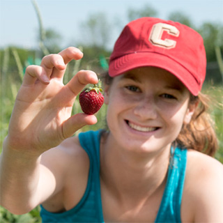 Charlotte Leape '18 holds up a Honeoye strawberry variety harvested from the research fields of Marvin Pritts. The honeoye strawberry breed was first released by Cornell's New York State Agricultural Experiment Station in 1979. Photo: Matt Hayes / Cornell