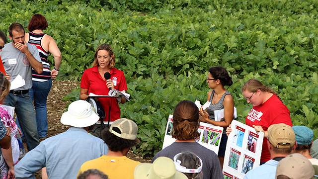 Christy Hoepting, Extension vegetable specialist for the Cornell Vegetable Program, discusses organic management of Swede midge, a growing pest problem in brassica crops.