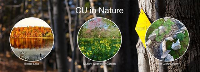 cu-in-naturex640
