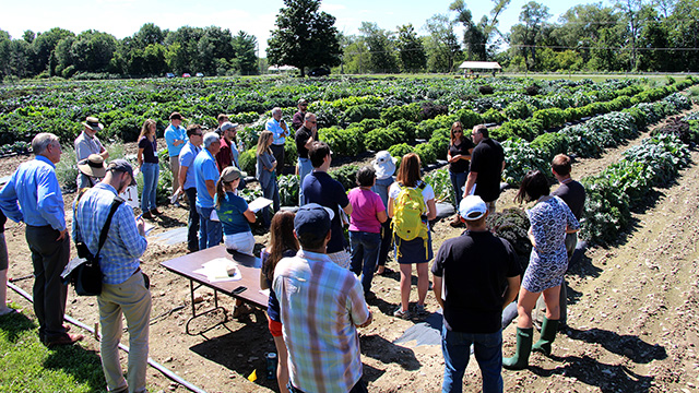 Griffiths introduces Kale Day participants to his breeding research trials.