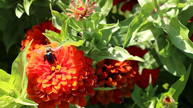 pollinator0674x640