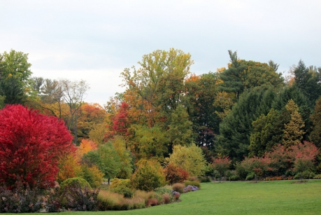 The bioswale garden, located next to the Nevin Welcome Center, is one part of the 150 acres of cultivated gardens on campus. (Photo: Jay Potter/Cornell Botanic Gardens)