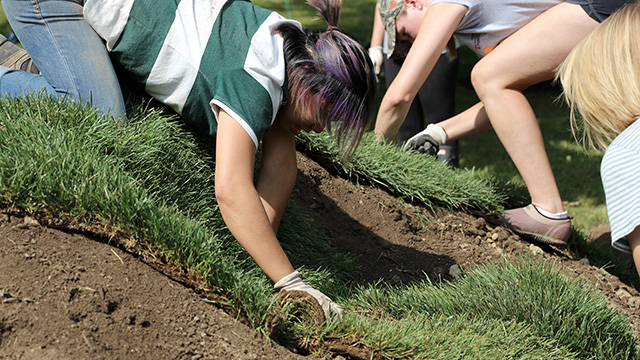 Art of Horticulture students install sod over the base.