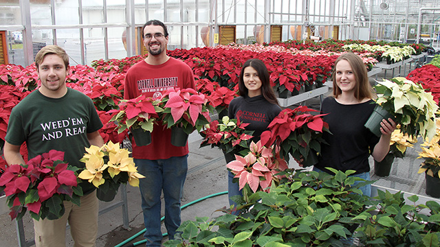 hofo crew with poinsettias