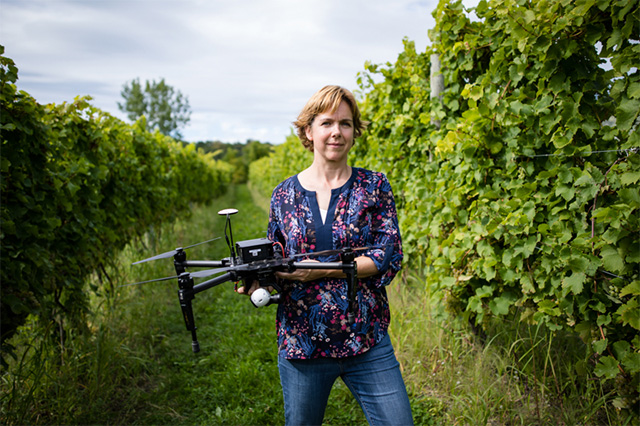 Drones collect detailed measurements of grape growing operations. Justine Vanden Heuvel, associate professor in the Horticulture Section, is providing New York growers with the tools to understand and make use of the rich data. Photo by Chris Kitchen.