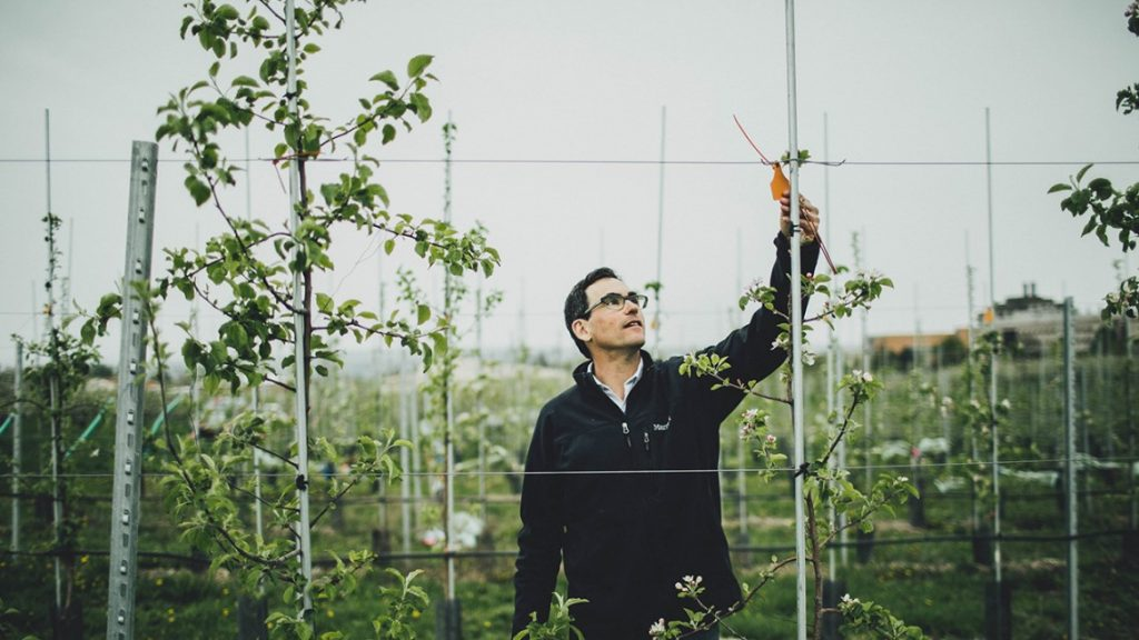 Gregory Peck, assistant professor of horticulture, tags apple trees as part of a research trial at Cornell Orchards.