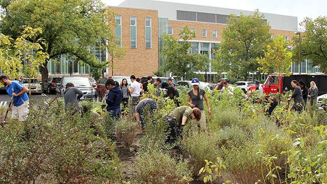 Students in Creating the Urban Eden: Woody Plant Selection, Design, and Landscape Establishment (PLHORT/LA 4910) plant trees and shrubs in the Peterson Lot bioswale.