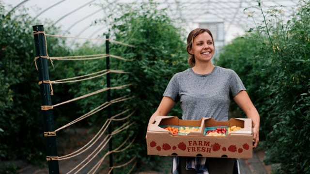 Hannah Swegarden, horticulture doctoral student, with a bin of Galaxy Suite tomatoes.
