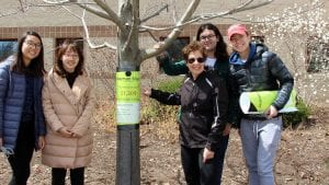 Nina Bassuk and students tag a tree outside Roberts Hall.