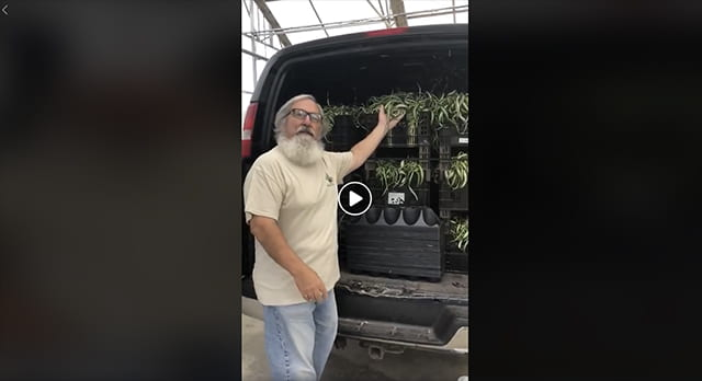 Lloyd Travern with van full of plants headed for Cornell 'Plant Drop'