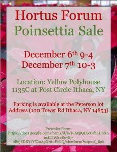 hortus forum poinsettia poster