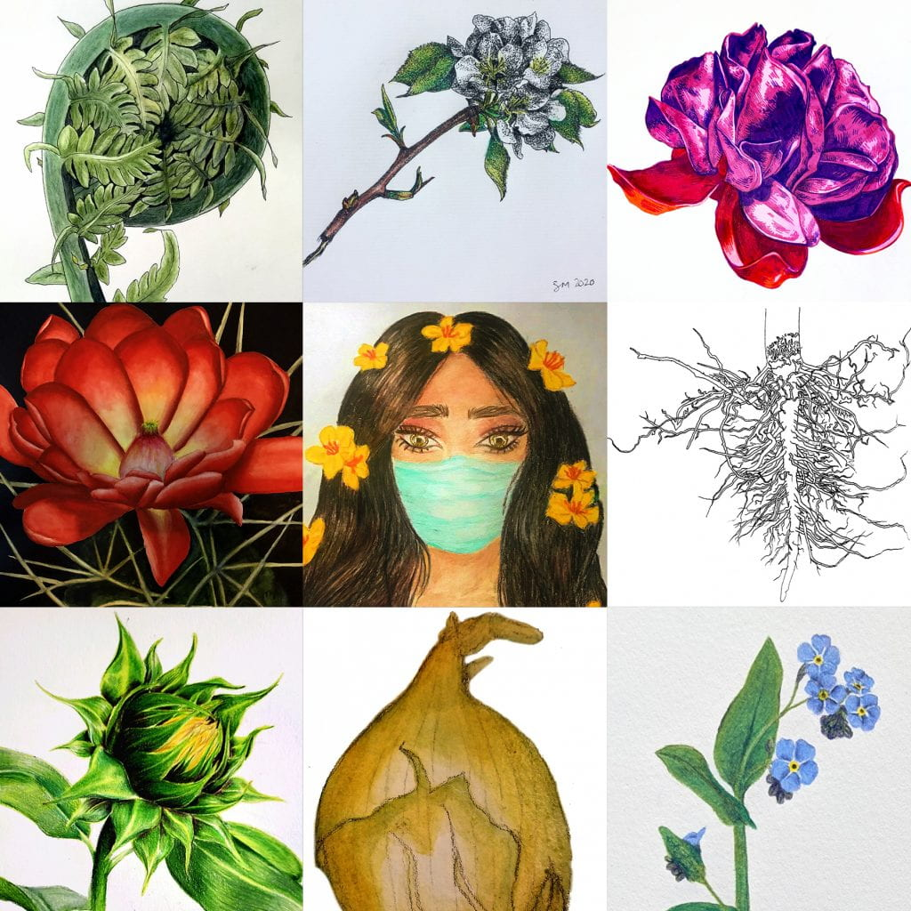 composite of student works from botanical illustration intensive course