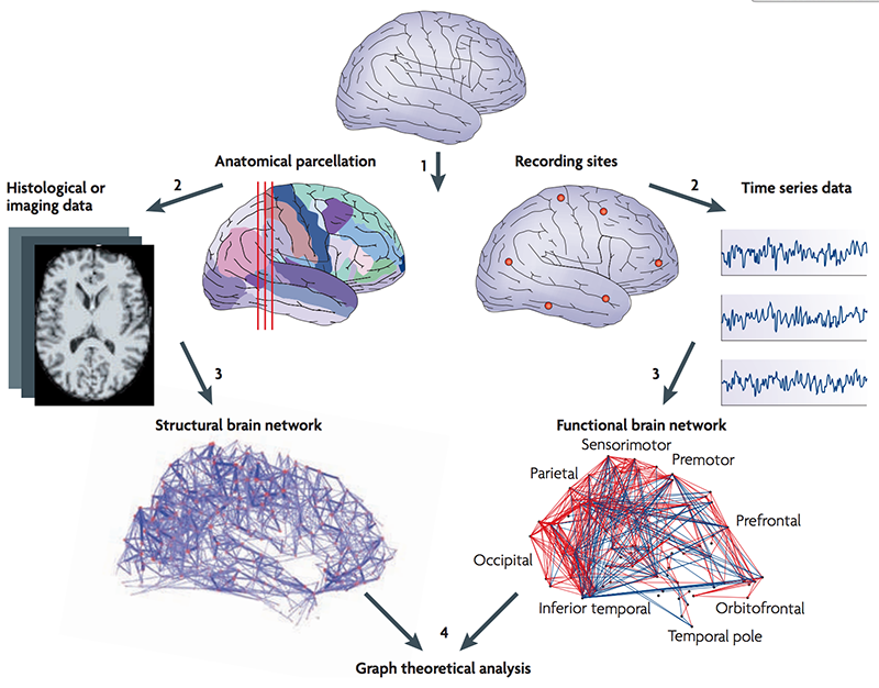 Using fundamental graph theory analysis to deconstruct the human in order to construct a graph of the brain we need to follow four distinct steps these steps can be found in their original text in the article but for our ccuart Images