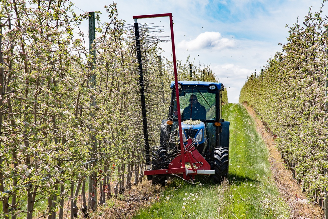 Jason Woodworth operates a tractor-mounted Darwin string thinning machine to thin apple blossoms on a fruit wall at the Lamont Fruit Farm in Waterport, New York. Lamont Fruit Farms participated in a recent Cornell study examining mechanical alternatives to chemical blossom thinning. Photo by R.J. Anderson/Cornell Cooperative Extension.