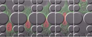 nuclear envelope composition2